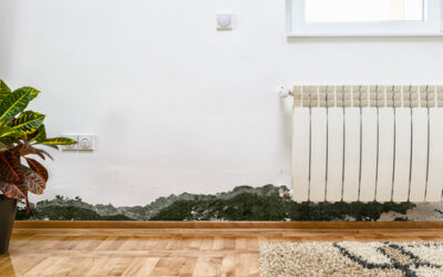 Handling Mold in Your Home